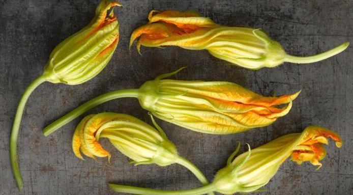 Comment cuisiner les fleurs de courgette